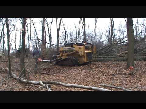 Logging windfall trees