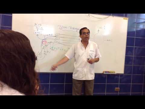 Clase de Neuroanatomía: Plexo braquial - Dr. Salazar USAT