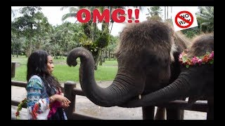 THE ELEPHANT SLAPPED ME!! | AALIYAHJAY