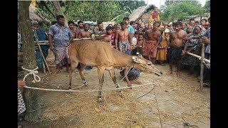 ঠাকুরগাঁওয়ে আজব প্রানির সন্ধান কি এই প্রানি জানলে চমকে যাবেন