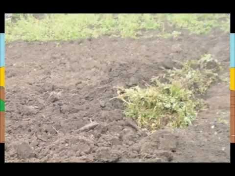 Удобряйте почву зеленью