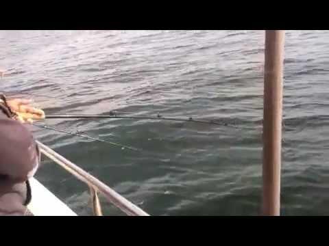 Sheepshead bay brooklyn fishing videos for Brooklyn vi fishing