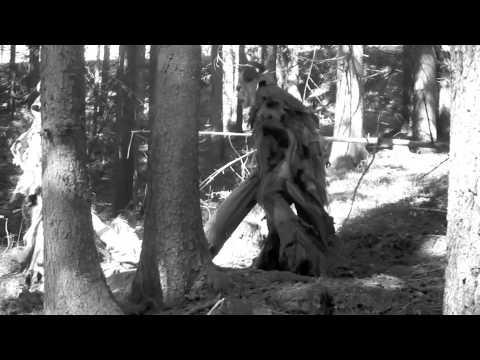 Krampuskränzchen der Abidales Pass 2011-Film