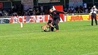 BARON DE VULCAIN finale Ring 2011 à Tavaux, arrêtée