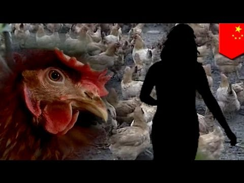 China reports first human case of H10N8 bird flu