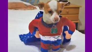 Funny Dog , funny cat and funny animal video #funnyitx Episode 023