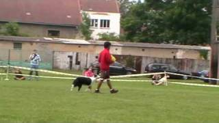 Shaun & Shack dogfrisbee Demo on Czech DiscDog Open 2010