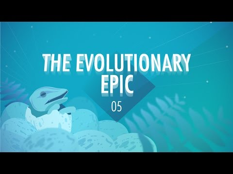 In which John Green, Hank Green, and Emily Graslie teach you about evolution. So, in the last 3.8 billion years, life on Earth has evolved from single-celled prokaryotes to the dizzying array...