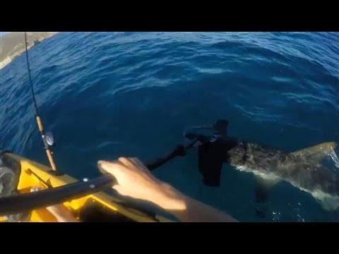 サメ襲来!?危険なサメの攻撃にヒヤヒヤする映像