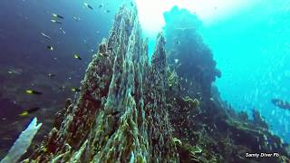 Underwater Cathedral: the Colorful Prony Needle in New Caledonia