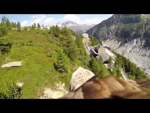 камеру GoPro одели на орла