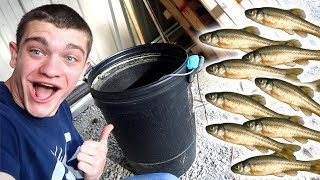 HOMEMADE BAIT TANK! *Minnow & Bluegill*