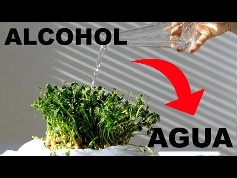CONVERTIR ALCOHOL EN AGUA