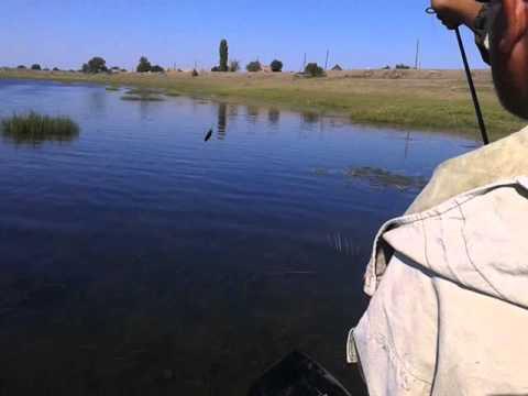 рыбалка во  астрахани ложбина  казацкий  видео