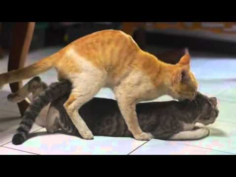 cat sex videos Top 40 sex positions - The Cat - goodtoknow.