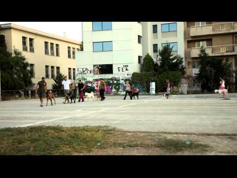 Εκπαιδευση σκυλων - Υπακοη,group μαθημα 18/9/10 - k9training.gr