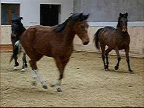 Konie Rzeszów