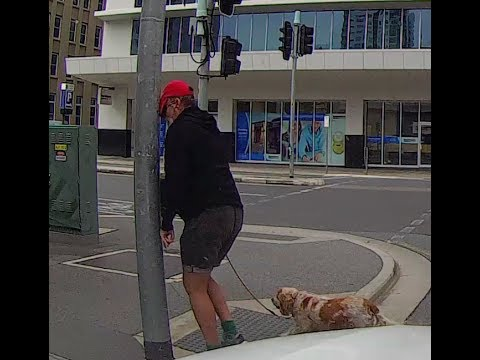 Angry pedestrian gets instant karma