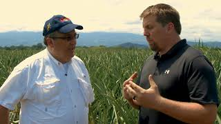 The Source Live | Dole Food Company - Costa Rica