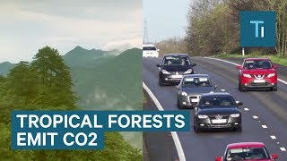 Tropical forests now emit more CO2 than all US cars and trucks combined