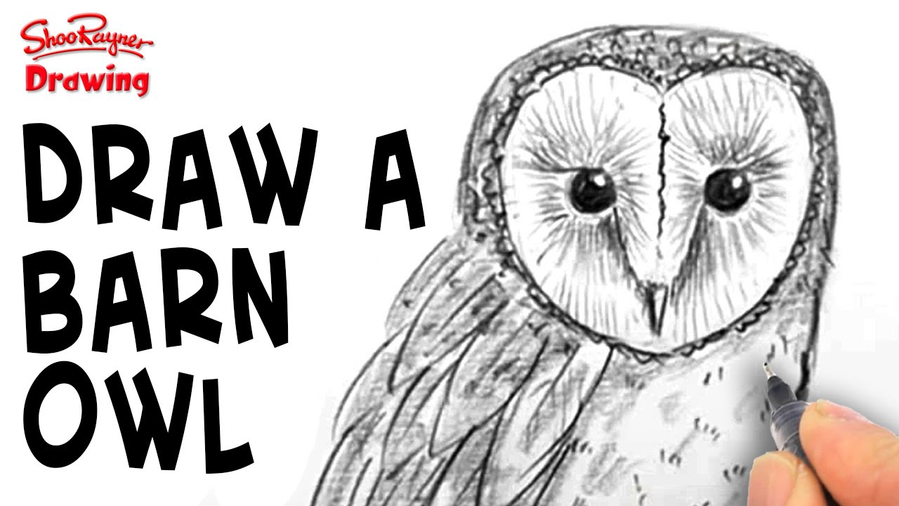 Barn Line Drawing How to Draw a Barn Owl