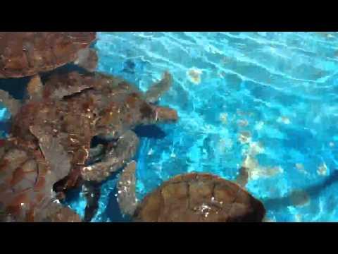 Big turtles at turtle farm on Isla Mujeres