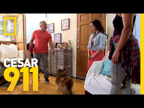 Hair Dryer Trigger | Cesar 911