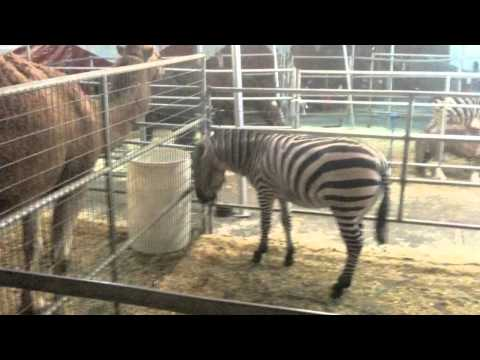 Aditi Singh Sharma Says NO to Animal Circuses