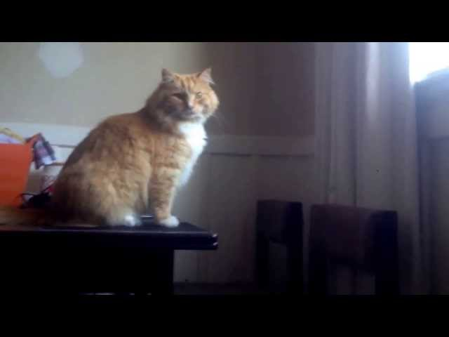 Fat Cat Fail Fat Cat 39 s Attempted Jump Ends