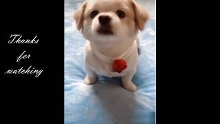 Dogs are Amazing | Cute pets and funny animals compilation #1