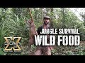 Living off the Jungle, Wild Foods Tour MP3