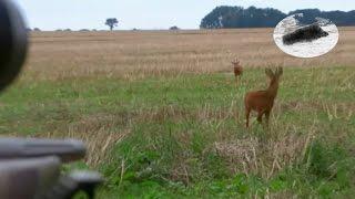 How to call roebuck - best roebuck hunting Rehbock jagd Chasse brocard Wabienie kozła