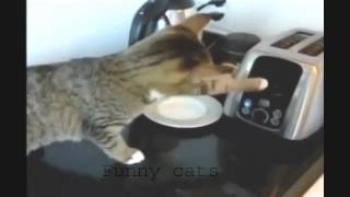 Funny Cat Videos Compilation Funny Cats Video Funny Animals Funny Fails 2014 Funny Videos