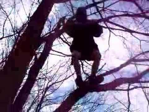 Benjamin Climbs a Tree