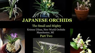 Japanese Orchids: The Small and Mighty. Part 2 of 3