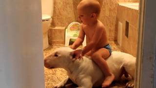 Bull Terrier Manowar little horse - Лошадка Мася