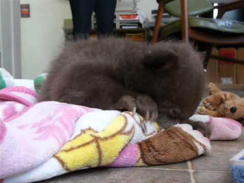 クマの赤ちゃんが毛布に抱...