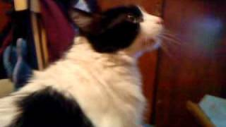 Gato Tom Cantando Las Mañanitas