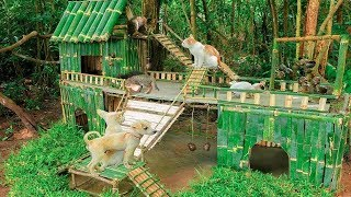 Rescue Kitten Cats And Build Bamboo Cats House