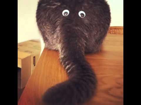 猫が象に見える?