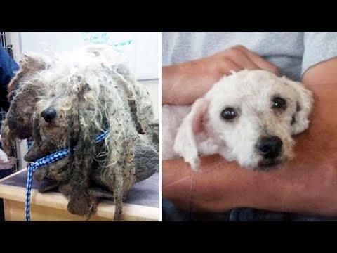 15 НЕВЕРОЯТНЫХ превращений собак ДО и ПОСЛЕ приюта!