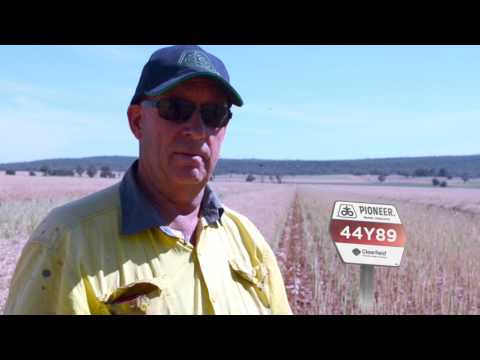 Extraordinary season nets excellent canola results at Lockhart