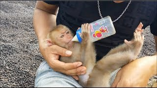 Baby Monkey Learns How To Drink Milk By Milk Bottle