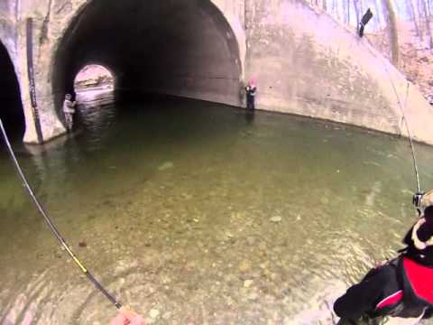 steelhead fishing erie pa 2014