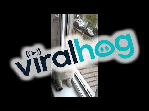 Gato concentrado viendo el mas alla