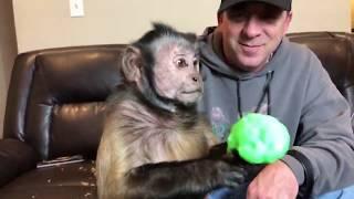 Monkey Fun Time! (RECORDED LIVE)