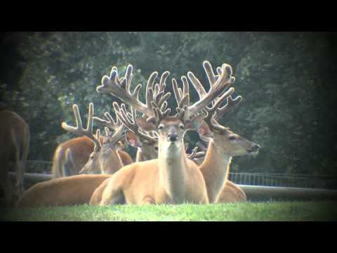 They Keep Growing and Growing | Deer & Wildlife Stories