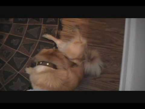 Dog humps his own mouth, LMAO!!