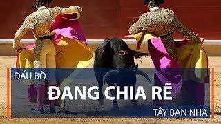 Đấu bò đang chia rẽ Tây Ban Nha | VTC1