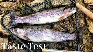 Kokanee Salmon vs. Stocked Trout Catch n' Cook Taste Test